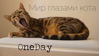 Мир глазами кота//OneDay