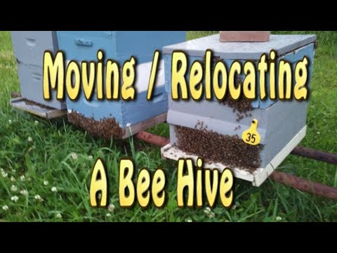 Relocating A Bee Hive / 3 Feet Or 3 Miles Rule