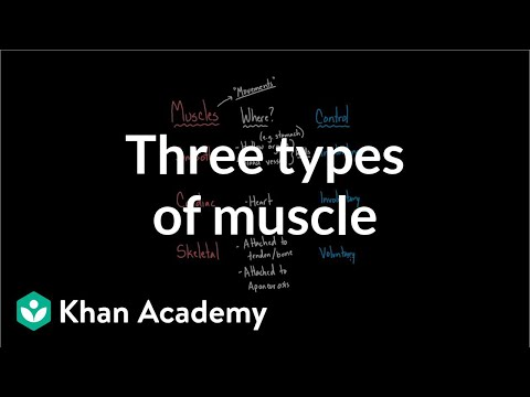 Three types of muscle | Circulatory system physiology | NCLEX-RN | Khan Academy