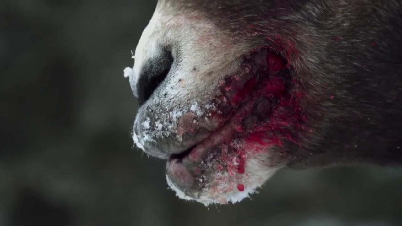 Thiên nhiên hoang dã: Động Vật Hoang Dã Trên Dãy Andes | Phim Tài Liệu HD (Thuyết minh)