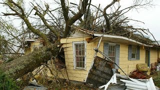 7 EXTREME Dangerous Tree Fails Compilation 2019 ¦¦ Tree Removal Fail ¦¦ Tree Falling in House