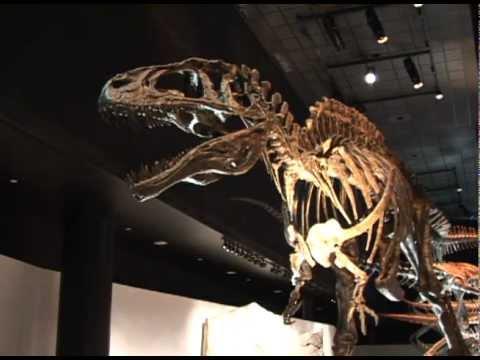 HMNS Paleontology Hall