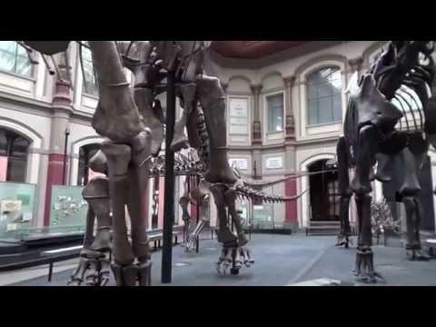 Fische, laut und leise. Ein Kunstprojekt im Museum für Naturkunde Berlin