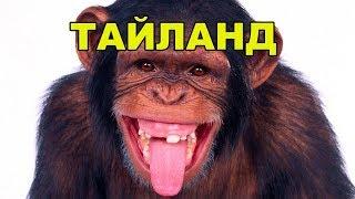 54 эпизод.Тайланд. Злые обезьяны захватили школу. Давняя история. Бангкок.Паттайя.Видео 4 к