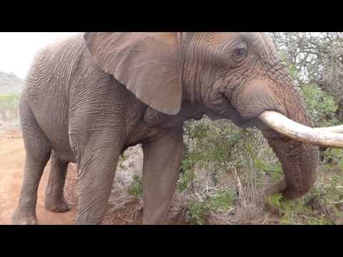 An elephantine encounter, South Africa, September 2016