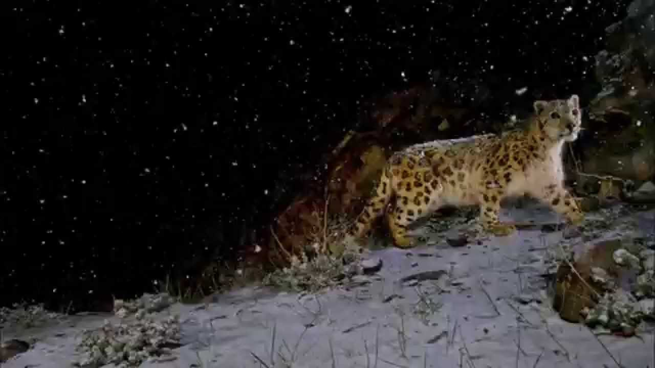 Image of: Most Dangerous Top 10 Most Dangerous Nocturnal Animals In The World Youtube Top 10 Most Dangerous Nocturnal Animals In The World Youtube