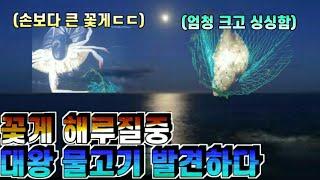 아빠와 함께 밤바다 해루질 꽃게 잡다가 엄청 큰 물고기…