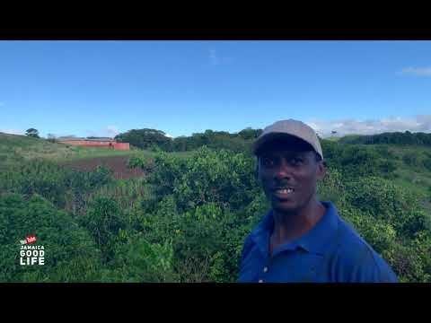 THIS MAN HAS A GOOD RELATIONSHIP WITH GOD    EP534   JAMAICA GOOD LIFE 🇯🇲
