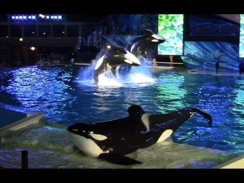 Shamu's Celebration: Light Up the Night (Full Show) at SeaWorld San Diego 6/20/14