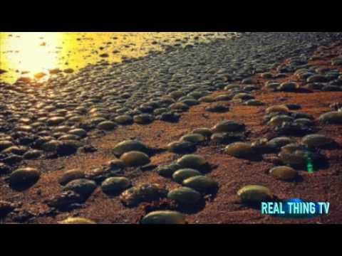 Thousands of blue jellyfish invade Australian shore