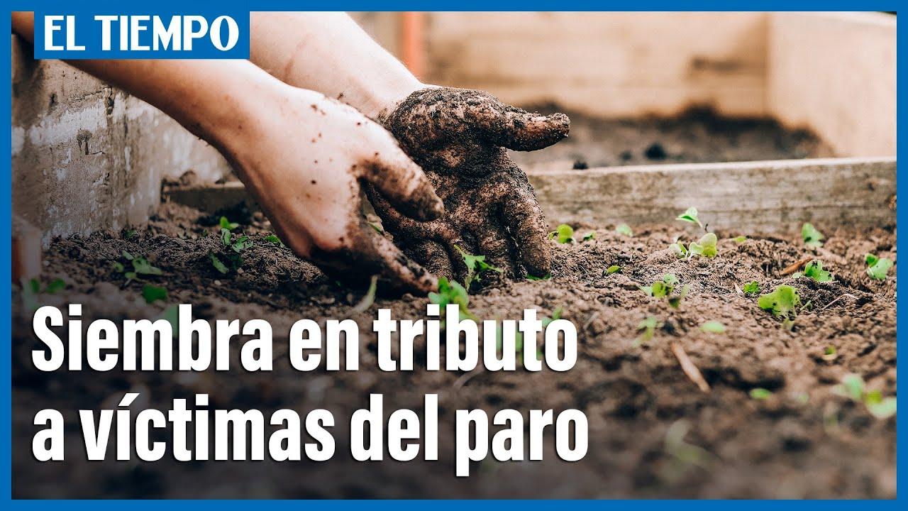 SIEMBRA DE ÁRBOLES POR LAS VÍCTIMAS DEL PARO EN COLOMBIA