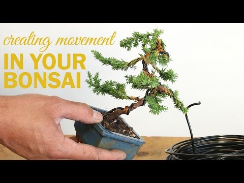 How to Create a Bonsai with Movement : Wiring a bonsai tree trunk
