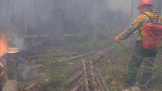 Страшные пожары в Бурятии: бороться с огнем может только авиация