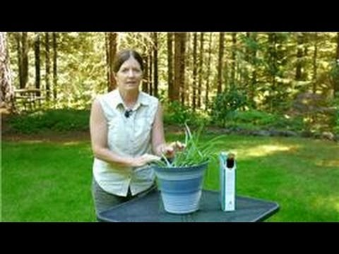 Growing & Caring for Foliage Plants : How to Feed Aloe Vera Plants