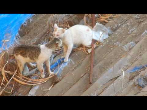 Cats fighting seriously