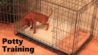 Puppy Apartment - Official Video - Part 1 of 2