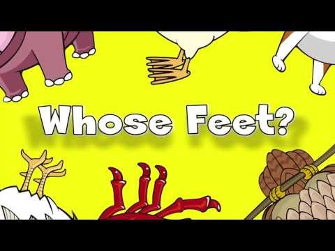 Whose Feet? | Learn Animals Song for Kids - YouTube
