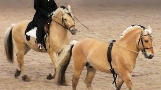 ФЬОРДСКАЯ лошадь /Норвежский фьордский пони #ИППОсфера 2019 конная выставка Фьордская порода лошадей