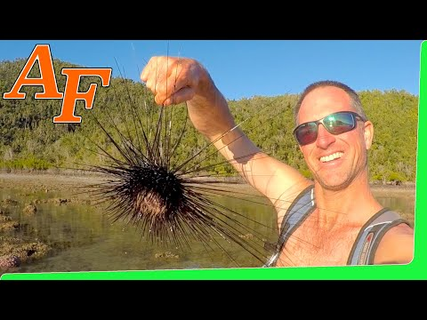 Tropical Island Coast Seafood Forage Catch and Cook Sea Urchin Octopus Oyster EP.414