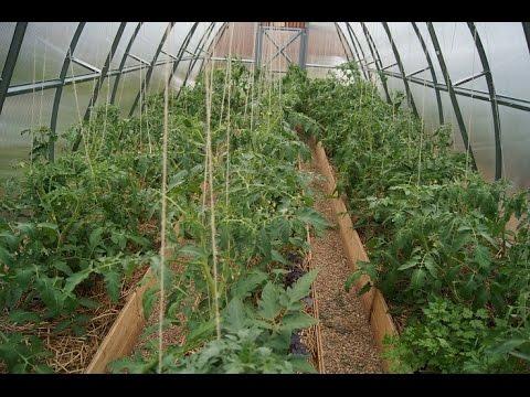 Использование человеческих лекарств для растений - овощей