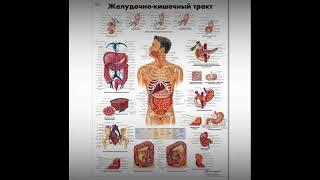 Сеанс и медитация восстановления желудка и пищеварительного тракта