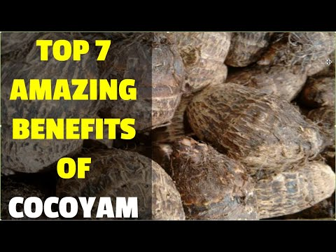 top-7-amazing-benefits-of-cocoyam---taro-root-(colocasia)