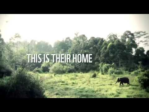 Help The Elephants in Indonesia - Earth Hour 2015