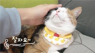 고양이가 좋아하는 힐링음악.분리불안.수면유도 8시간 재생. cat music relax