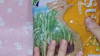 베트남에서 사온 사탕수수 원당