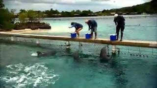Nova Science Now : How Smart Are Dolphins?