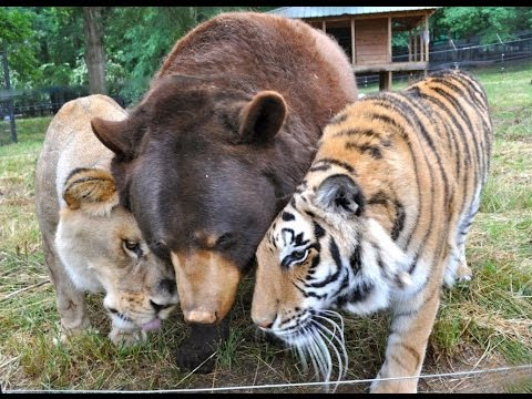 Very Cute, Unusual, Strange & Adorable Animal Friendships Compilation [HD VIDEO]