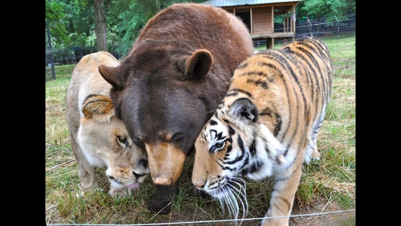 Tulus dan Menggemaskan! 10 Foto Persahabatan Hewan Lintas Spesies Ini Sungguh Tak Terduga