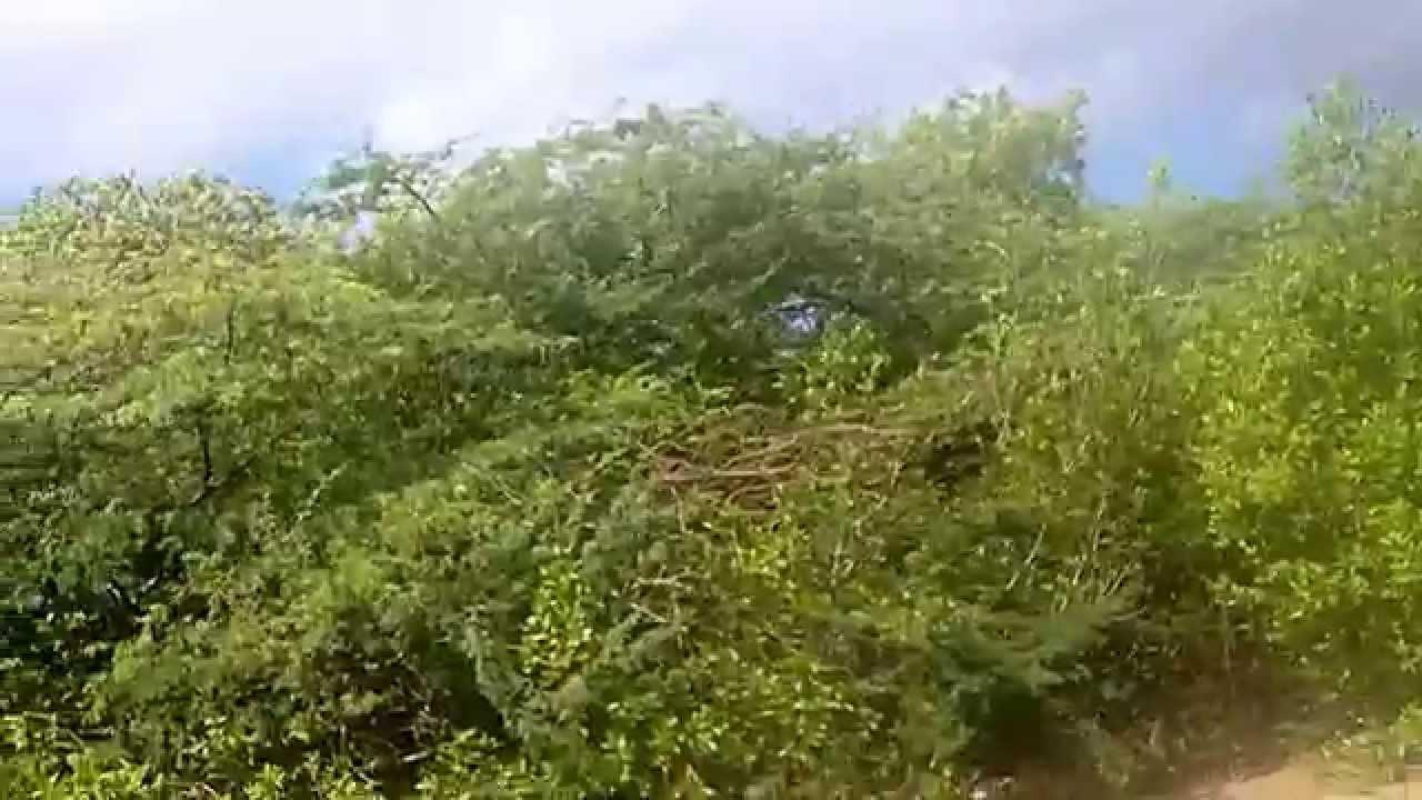 Quad at Santa Martha Bay, Curacao - YouTube