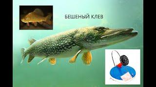 Щука зажигает флажки один за другим Зимняя рыбалка 2021 Ловля Щуки на жерлицы