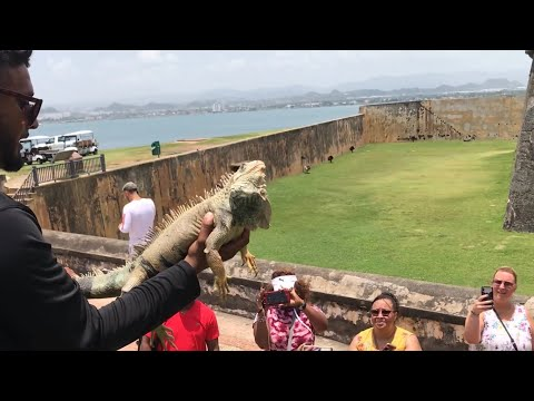 I Almost Got Arrested Iguana Hunting In Puerto Rico!
