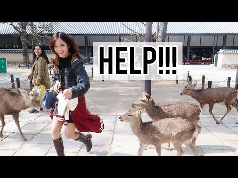 I Got Chased by Japanese Deer in Nara | Shopping night in Kyoto