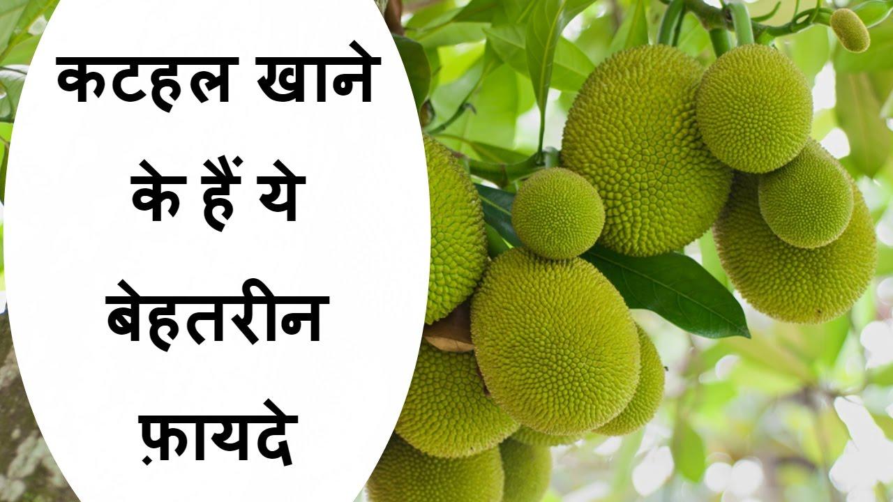 कटहल खाने के लाभ/benefits of jack fruit (कटहल)/health benefit of jack fruit