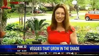 Best Vegetable Plants for Shade Gardening