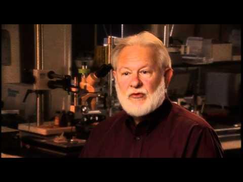 David Nichols: Mescaline-Psilocybin-DMT and LSD all activate the same biological target