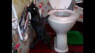 Кошка какает стоя! / Cat pooping standing!