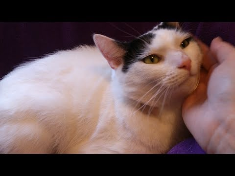 Wanted: Whisker tickler for Cambridge Cats Protection foster cat, Casper!