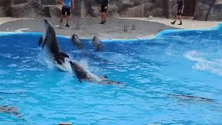Delfinariya Batumi Gürcüstan