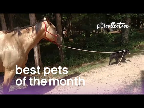 Best Pets Of The Month (March 2019) | The Pet Collective