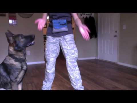 How to teach your dog to weave through your legs | with Havok the GSD | Amy Glunn | Valor K9 Academy