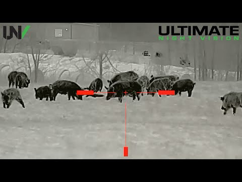 Why Do We Hunt Hogs?