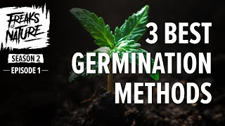 3 Easy Ways To Germinate Cannabis Seeds : Freaks Of Nature S2E1