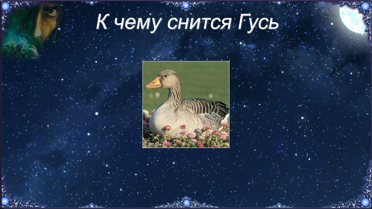 К чему снятся гуси
