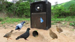 Download Mp3 Creative Unique Wild Bird Trap Using Deep Hole & Mach Speaker - Fantastic Qu