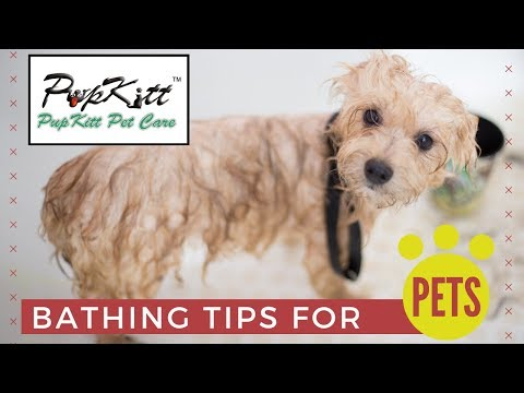 Bathing Tips For Pets | A Complete Bathing Guide For Your Pet