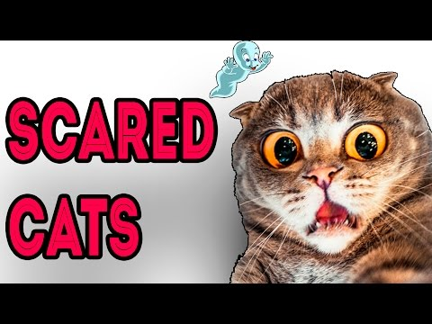 Funny Scared Cats Compilation 2016